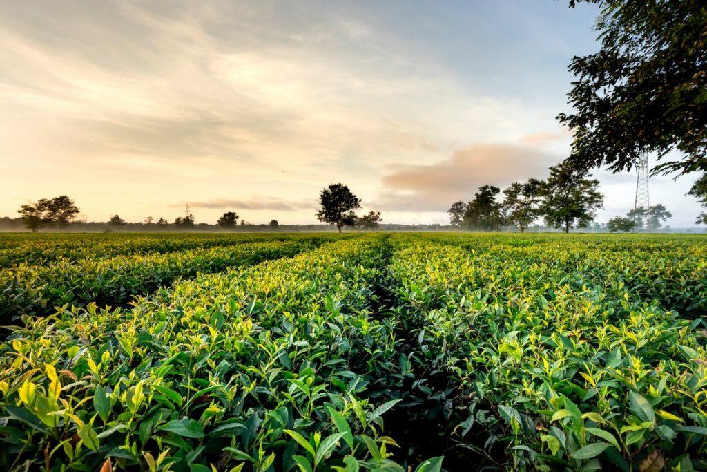 tasar terrenos agricolas